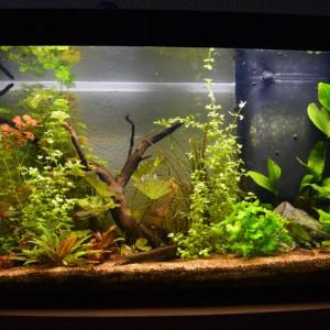Aquarium aquatlantis 180L led