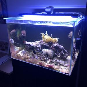 Aquarium eau de mer 170L et meuble complet avec vivant
