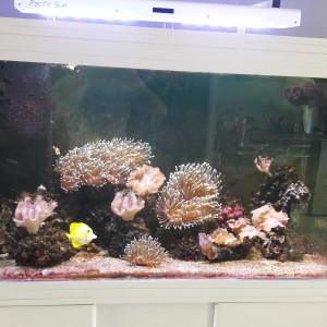 aquarium eau de mer 420 litres