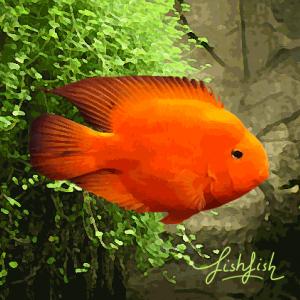 Perroquet rouge (environ 6 cm)