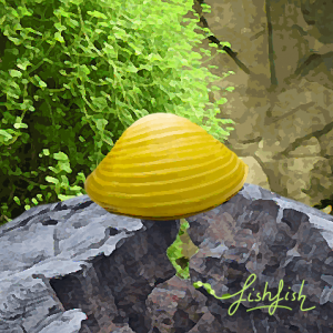 Clams doré (environ 3 cm)