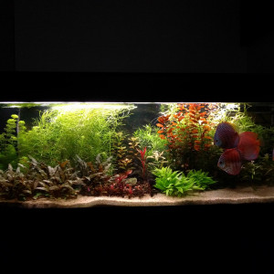 VDS Aquarium 450L + Meuble
