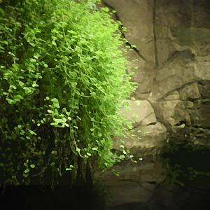 Guppy male endler vert (environ 2 cm)