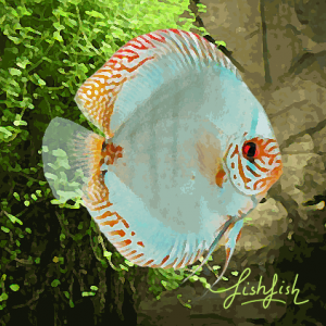 Discus solid turquoise (environ 6 cm) allemagne