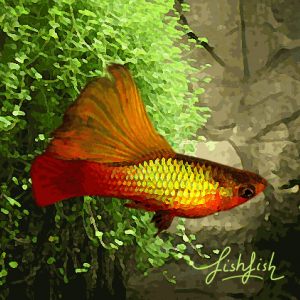 Platy indiana voile 4cm