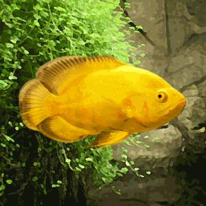 Oscar jaune citron (environ 7 cm)