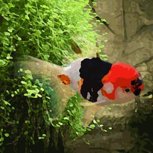 """Tete de lion tricolore """"aa"""" (14 à 16 cm)"""