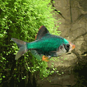 Barbus vert (environ 3 cm)