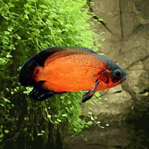 Oscar rouge (environ 7 cm)