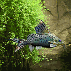 Synodontis eupterus (3 à 5 cm)