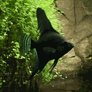 Scalaire noir melange (environ 4 cm)