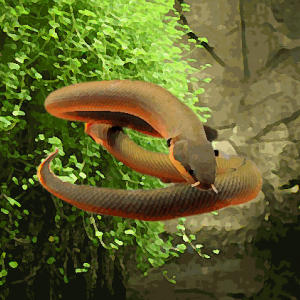 Erpetoichtys calabaricus