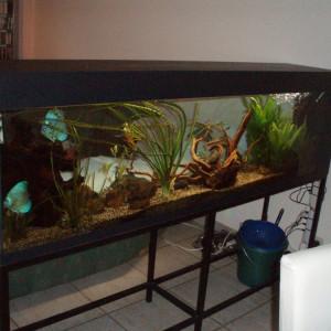Superbe aquarim grande taille