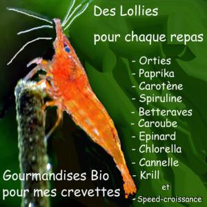LOLLIES : Nourriture artisanale Bio pour crevettes