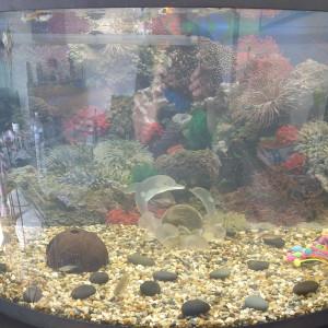Vend aquarium
