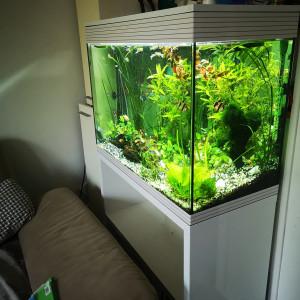Askoll aquarium, poisson et plantes