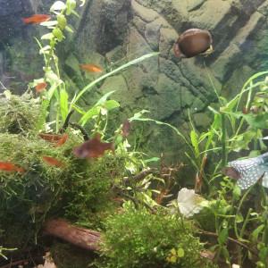 Don poissons contre bon traitement cause déménagement