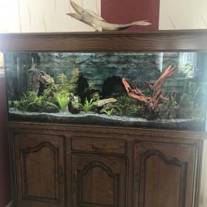 Vend Aquarium 450L