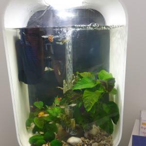 Aquarium biorb life 45l+ meuble + nombreux accessoires