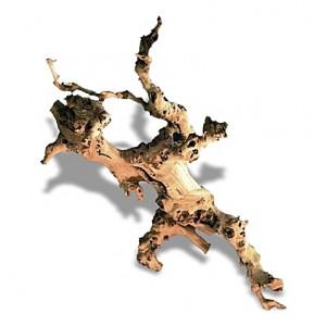 Racine de vigne de 30 à 45 cm