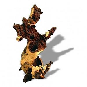 Racine de mopani de 15 à 30 cm