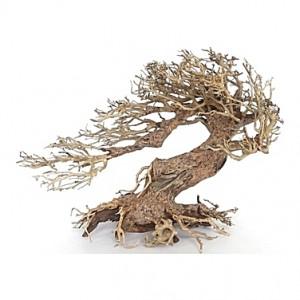 Racine arbre bonsaï 30x13x23 cm