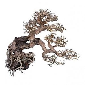 Racine arbre bonsaï 15x15x20 cm