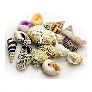Coquillages Assortiment Taille L 1Kg de coquilles