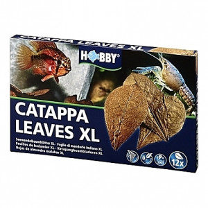 12 Feuilles de badamier CATAPPA LEAVES XL HOBBY