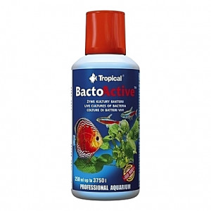 Culture vivante de bactéries BactoActive - 250ml