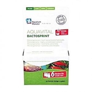 Bactéries lyophilisées Aquavital BactoStrpint - 30ml
