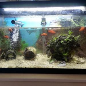 Donne platys +aquarium