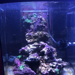 Matériel, produit et pierres vivantes aquarium récifal