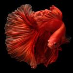 Aquariophile Gigibebou