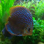Aquariophile kamuro69