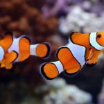 Aquariophile Badin