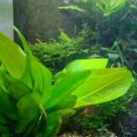 Aquariophile alexandre-turgis