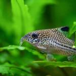 Aquariophile EcoLombric