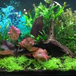 Aquariophile TOFF