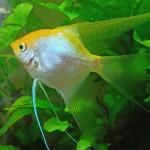 Aquariophile Djam