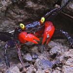 Aquariophile Armoris
