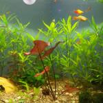 Aquariophile DimDimdim42
