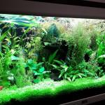Aquariophile Fred71