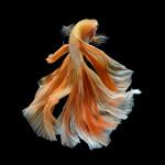 Aquariophile Cecile
