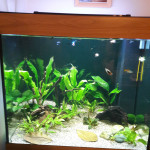 Aquariophile Manuman35