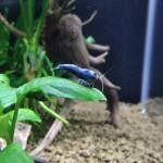 Aquariophile Vincent79