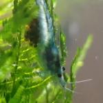 Aquariophile romain-riehl