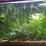 Aquariophile Yann59