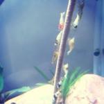 Aquariophile laetitia-paprika