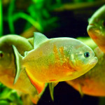 Aquariophile andy-dissous